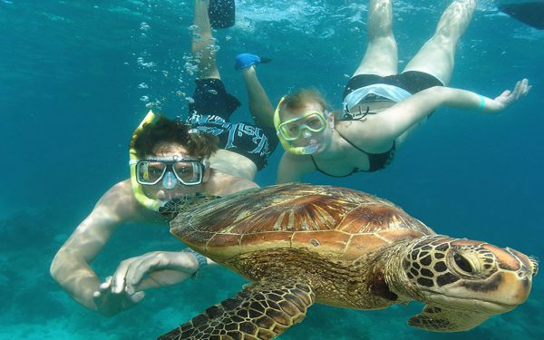 Swimming with turtles Marine Awareness Service Learning Mexico