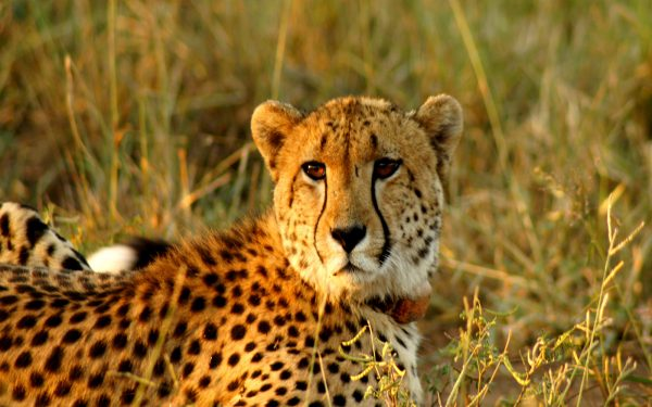 Leopard Service Learning Tour Limpopo
