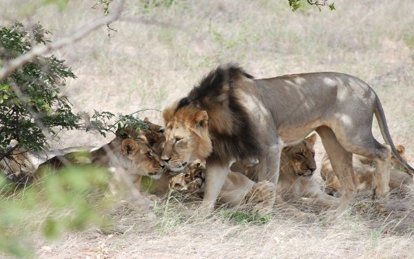 Lions Service Learning Tours Limpopo