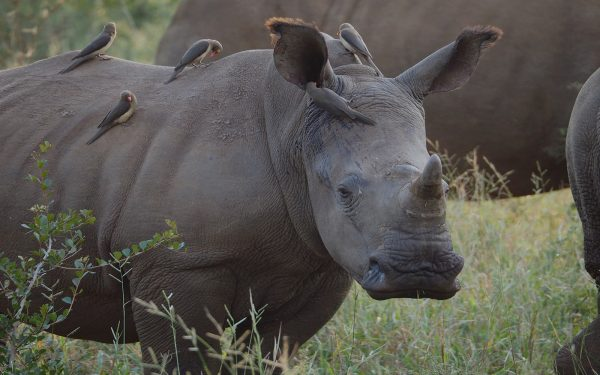Rhino Service Learning Tour Limpopo