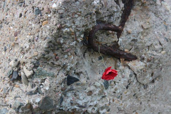 Poppy among limestone